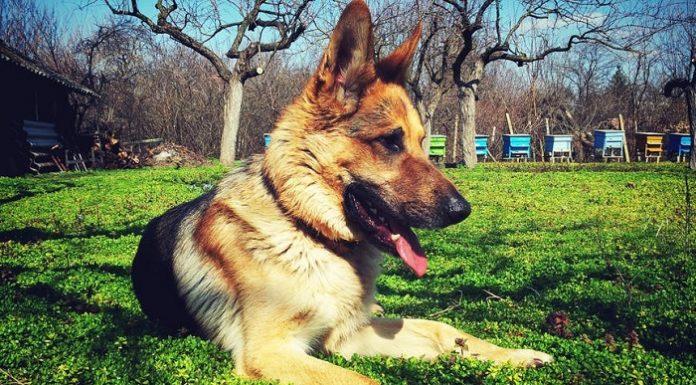 sanciones dueño perro que no lleven bolsas