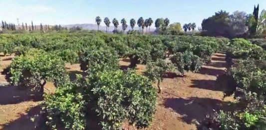 Agricultura Bétera