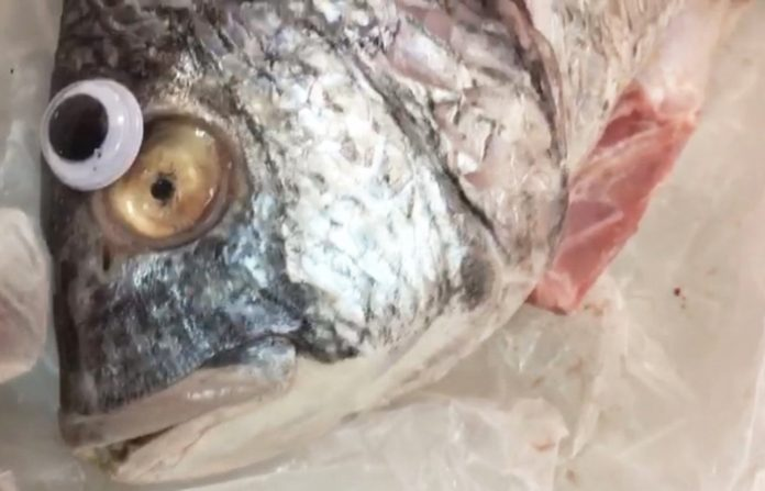 Peces con ojos de plástico para que parezcan frescos/ Peixos amb ulls de plàstic