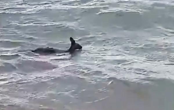 Imagen del canguro al ser rescatado