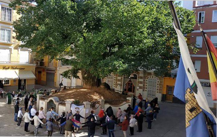 árbol monumental en Navajas