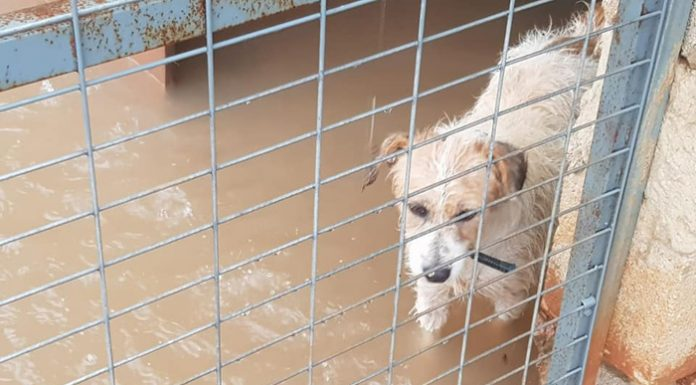 perros abandonados en Benimamet