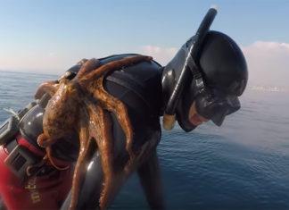 Un submarinista lucha con un pulpo