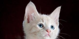 una gata