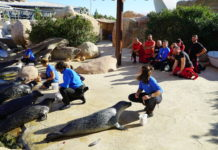 leones marinos del Oceanogràfic