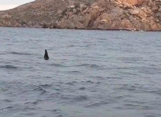 Avistan orcas en el puerto de Cartagena