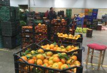 Mercavalència repartirà mandarines a la Cavalcada de Reis de València