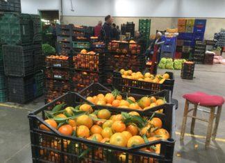 Mercavalència repartirá mandarinas en la Cabalgata de Reyes de València