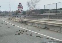 pájaros muertos