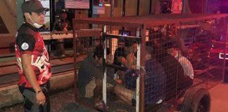 Castigos con flexiones, cárcel o jaulas para perro, así se pena el incumplimiento de la cuarentena en el mundo