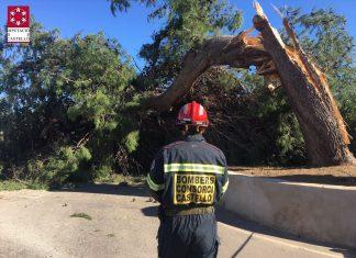 Bombero del Consorcio Provincial de Castellón trabajando en la retirada de árboles rotos por el viento