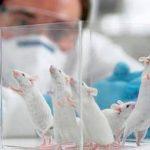 Investigadores españoles ensayan con animales la vacuna del coronavirus