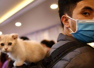 Detectan el primer gato infectado por coronavirus en España
