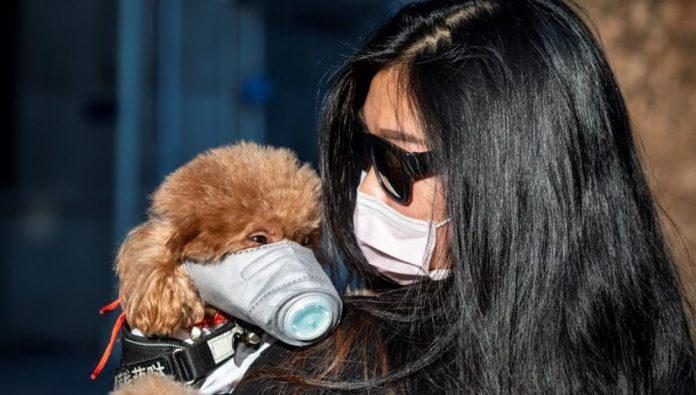 Cómo afecta el coronavirus a las mascotas: 9 cuestiones para resolver las dudas