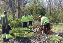 La Generalitat busca a 1.300 personas para trabajar en los bosques valencianos