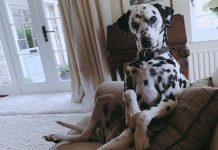 perro en posiciones de personas