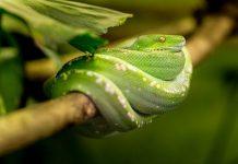 una serpiente de la boca