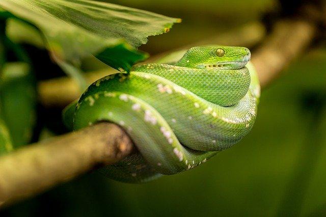 una serpiente de
