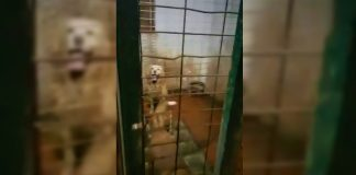 Rescatan a 10 perros de Valencia atrapados entre basura y excrementos