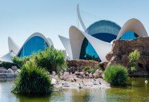 El Oceanogràfic lanza una promoción especial para el puente de octubre