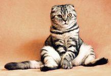 gato viceministro