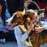 Bioparc celebra este sábado un desfile virtual de perros sin hogar