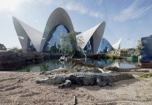 El Oceanogràfic anuncia dos promociones especiales para visitarlo en febrero