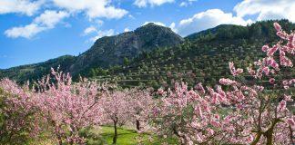 Descubre las mejores rutas de los almendros florecidos