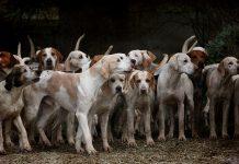 perros a los que han cortado las cuerdas vocales