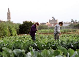L'agricultura valenciana, una altra gran víctima de la pandèmia