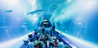 El Oceanogràfic se convertirá en un campamento infantil durante la semana de Pascua