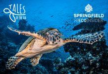 Springfield y Plastic Free apoyan a la Fundación Oceanográfic con las tortugas marinas