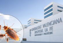 Denuncian un brote de cucarachas en el hospital La Fe de Valencia