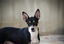 Bioparc celebrara el desfile de perros junto a A.U.P.A el 22 de junio