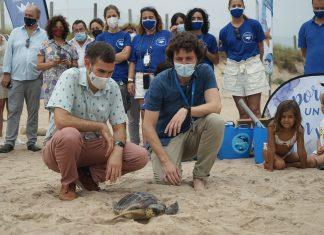 """El Oceanogràfic presenta la campaña """"Tortugas en el Mediterráneo"""""""