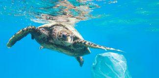 """Oceanogràfic y Paradores activan la campaña """"El mar empieza aquí"""""""