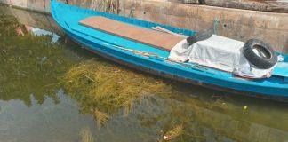 vegetación subacuática